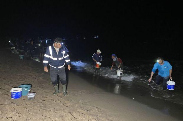 Amasra'da tonlarca balık kıyıya vurdu, kovayı alan sahile koştu