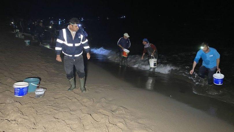 Amasra'da tonlarca balık kıyıya vurdu! Vatandaşlar balıkları toplamak için yarıştı