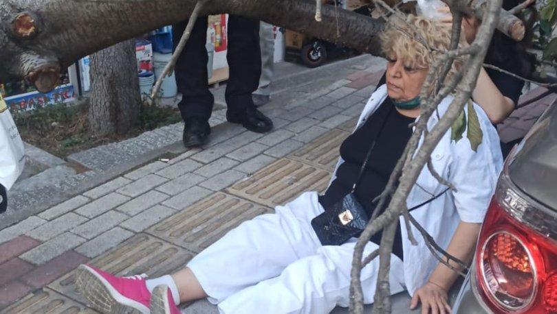 Devrilen ağacın çarptığı kadın yaralandı - Haberler