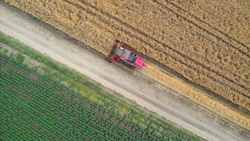 Tarım sektörü 12 çeyrektir büyüyor