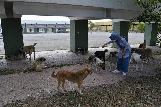 Karavanıyla şehir şehir gezerek sokak hayvanlarına mama dağıtıyor