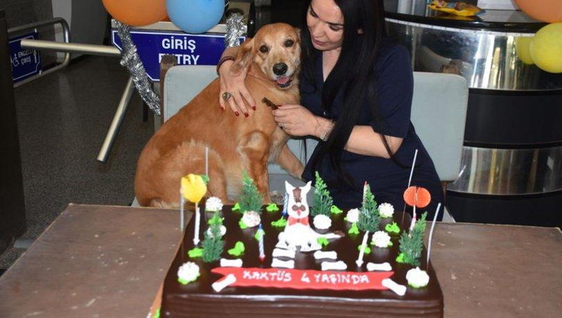 Sahiplendiği köpek için doğum günü partisi düzenledi