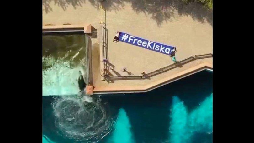 SON DAKİKA: Son orka Kiska yıllardır beton tankın içinde tutsak: