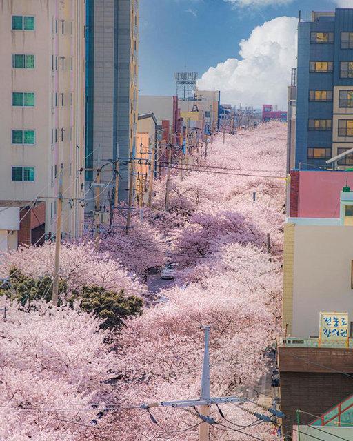 Güney Kore'de rastlayabileceğiniz ilginç manzaralar ve icatlar! - Haberler