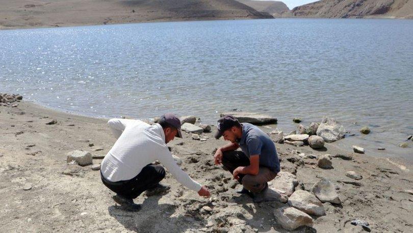 SON DAKİKA! Kıyıda yüzen kemikler var! 2005'ten beri görülmüyordu - HABERLER