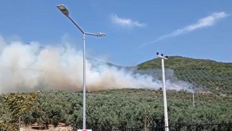 Bursa'da zeytinlik alanında yangın! - Haberler