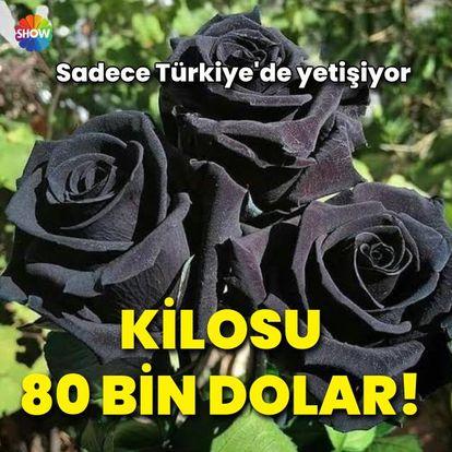 Sadece Türkiye'de yetişiyor! Kilosu 80 bin dolar - Son dakika haberleri