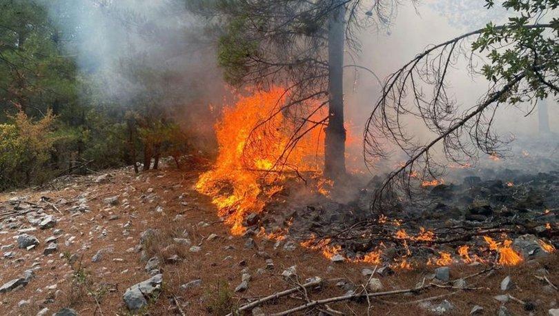 Muğla'da 20 noktada çıkan orman yangınları kontrol altına alındı