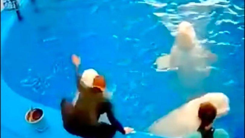 SON DAKİKA: Rusya'da iki beyaz balina eğitmen tarafından saldırıya uğradı!