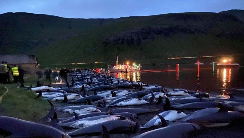 YUNUS KATLİAMI | Son dakika: Faroe Adaları'ndaki yunus katliamını anlattılar
