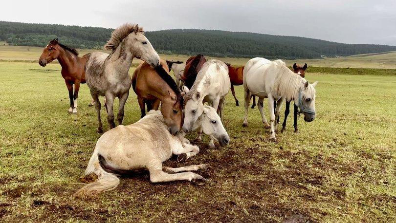 SON DAKİKA: Yılkı atı toplayan 4 kişiye suçüstü! - Haberler