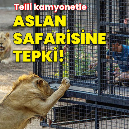 Antalya'da telli kamyonetle aslan safarisine tepki!