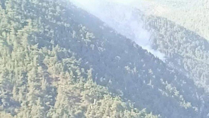 Ormana düşen yıldırım yangına yol açtı - Haberler