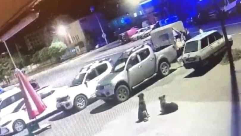 Boynuna ip takılarak sokak köpeklerini toplayan belediye personeline ceza kesildi
