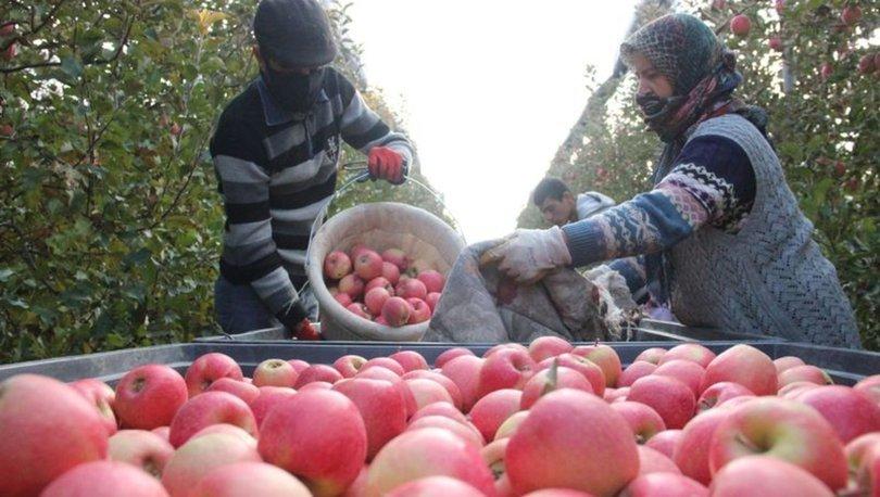 FİYAT UÇURUMU... Son dakika: Dalında 1,5 lira olan elma markette 6 lira
