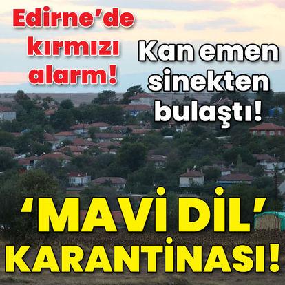 Edirne'de kırmızı alarm! 8 köyde 'mavi dil' karantinası!