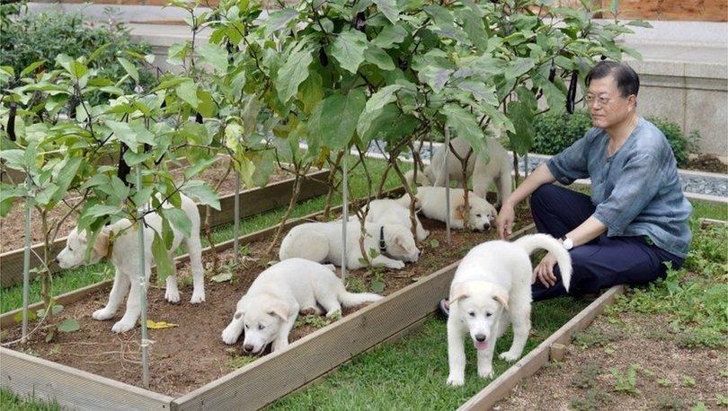 SON DAKİKA: Güney Kore lideri Moon: Köpek eti tüketimini yasaklamanın zamanı geldi