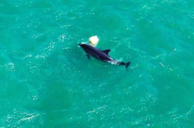 Yunusun şamandırayla oyunu drone ile görüntülendi