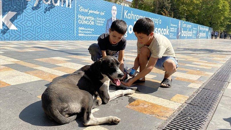 Kahramanmaraş'ta otomobilin çarptığı köpeğe çocuklardan yardım eli