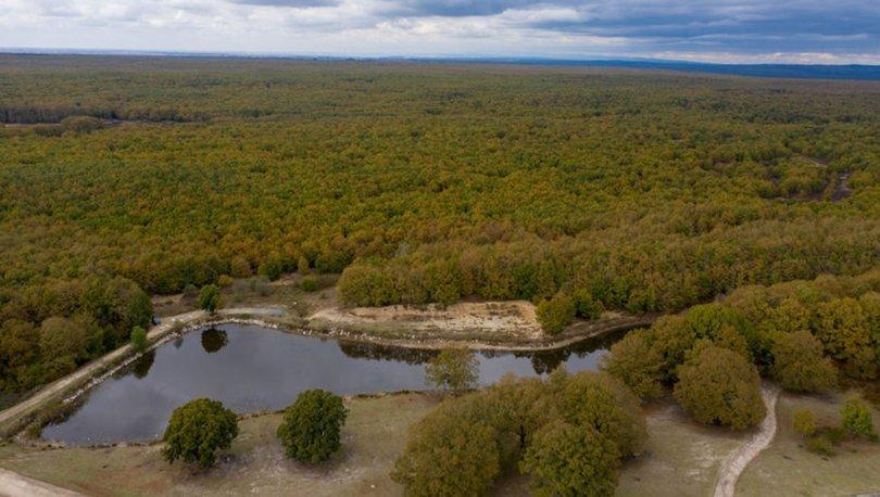 Tekirdağ'daki Kazak Gölü ve İkiz Göller sonbahar renklerine büründü