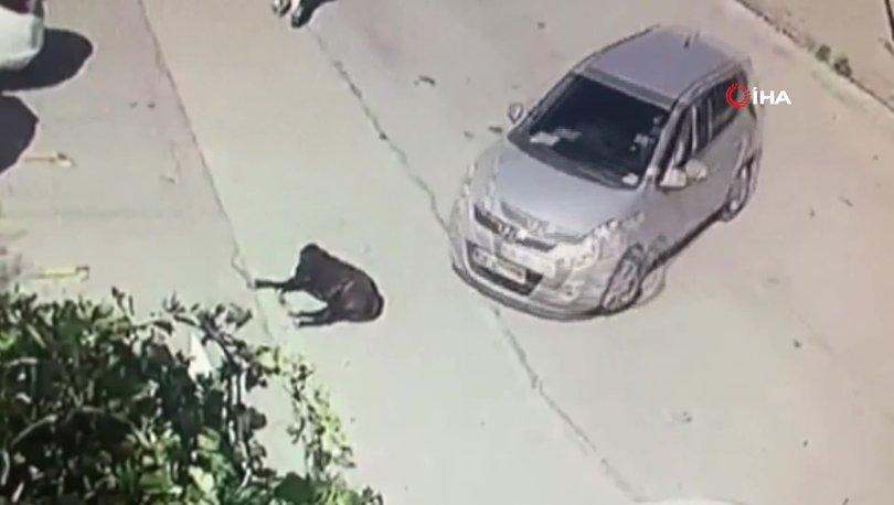 VAHŞET... Son dakika: Cani şoför, köpeği kameralar önünde böyle ezdi - VİDEO HABER