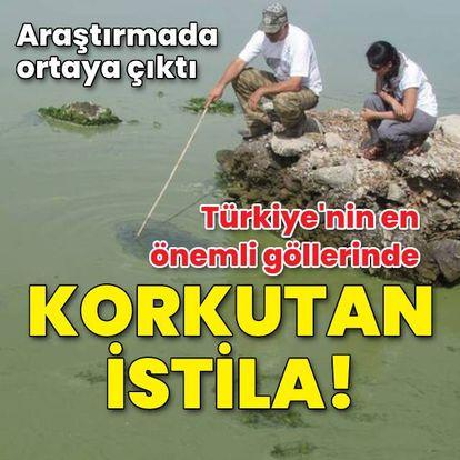 Göllerde korkutan istila! Araştırmada ortaya çıktı