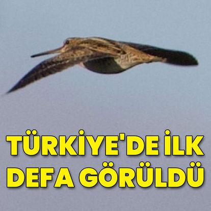 Türkiye'de ilk defa görüldü...