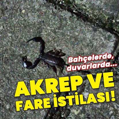 Sarıyer'de bir sokağı akrep ve fareler bastı
