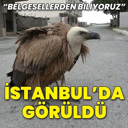 """İstanbul'da görüldü... """"Belgesellerden biliyoruz"""""""