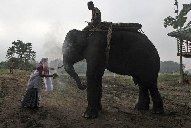 Hindistan'da vahşi hayat