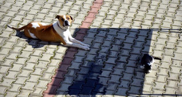 Bodrum'un Yokuşbaşı mevkisinde, kara yolu kenarında bir iş yerinin önünde yerde hareketsiz yatan kediyi gören bir köpek, başında beklemeye başladı. Köpek, havlayarak çevredekilerin dikkatini çekmeye çalıştı. Bu sırada yoldan geçen gazetecilerin dikkatini çeken durum, saniye saniye kaydedildi.   Görüntülerde yolda yaralı halde yatan kediye köpeğin yardım etmeye çalışması görülüyor. Köpeğin, zaman zaman çevredeki iş yerlerinin de kapısına giderek yardım istediği, daha sonra yeniden kedinin başına döndüğü dikkati çekiyor.  İŞTE SÖZE GEREK BIRAKMAYAN VE GÜNE DAMGA VURAN DİĞER KARELER>>>