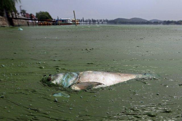 Ölü bir balinanın cesedi kıyıya vurdu.