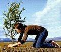 Ağaç dikmek - 30 dak - 150 kalori