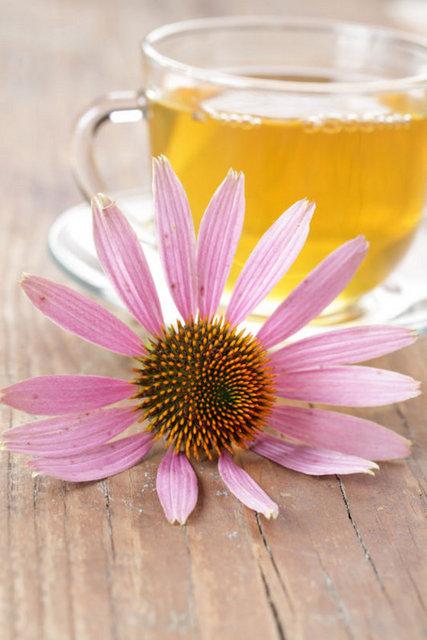 """Üst solunum yolu hastalıkları denince akla ilk gelen bitkilerden biri """"ekinezya""""dır. Çiçeklerinin çok güzel bir görünüme sahip olmasının yanı sıra son yıllarda bazı türlerinin bağışıklık sistemi üzerinde ve özellikle soğuk algınlığı şikayetleri üzerindeki yararlı etkileri dikkat çekmektedir."""
