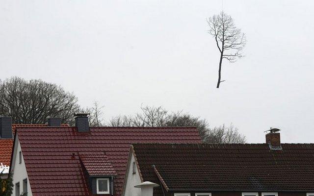 Bu fotoğraf Almanya'da çekildi... Helikopterle taşınan bir ağacın yere düşme anı...