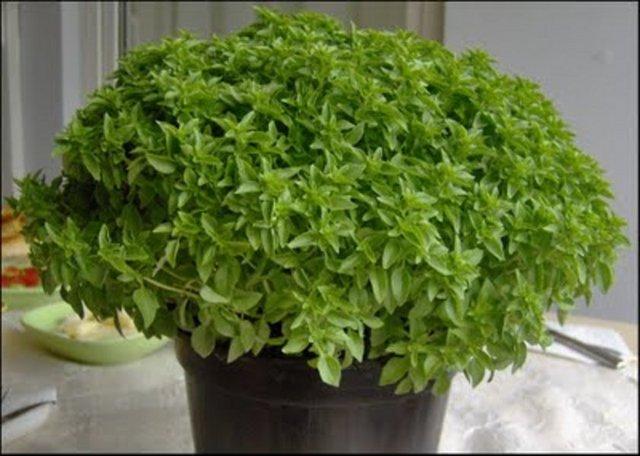 Balkonda yetiştirebileceğiniz bitkiler