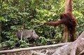 Kendisine saldıran leoparı öldürdü