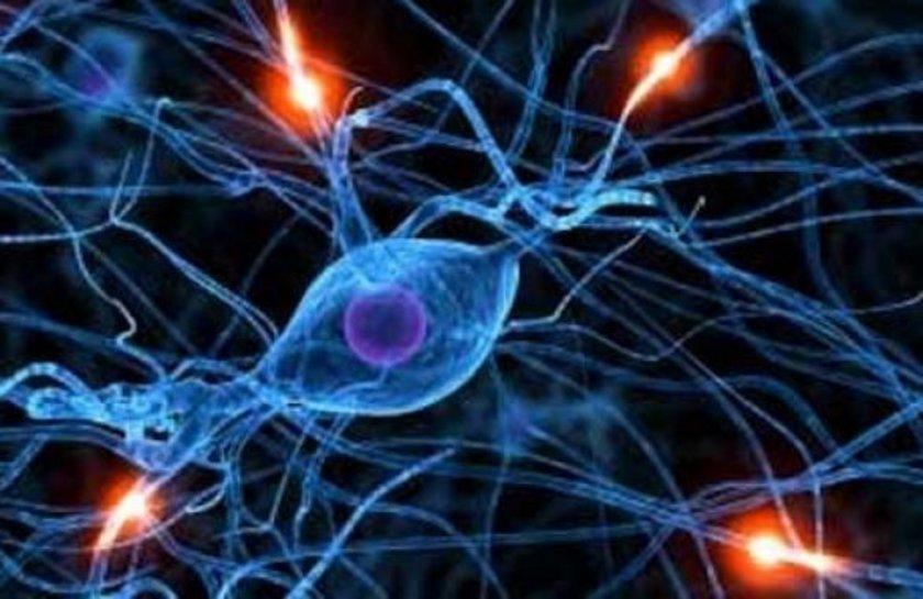 """Bunların arasındaki """"C-glyTrp"""" adlı metabolitin en önemli anahtarı oluşturduğu belirtildi."""