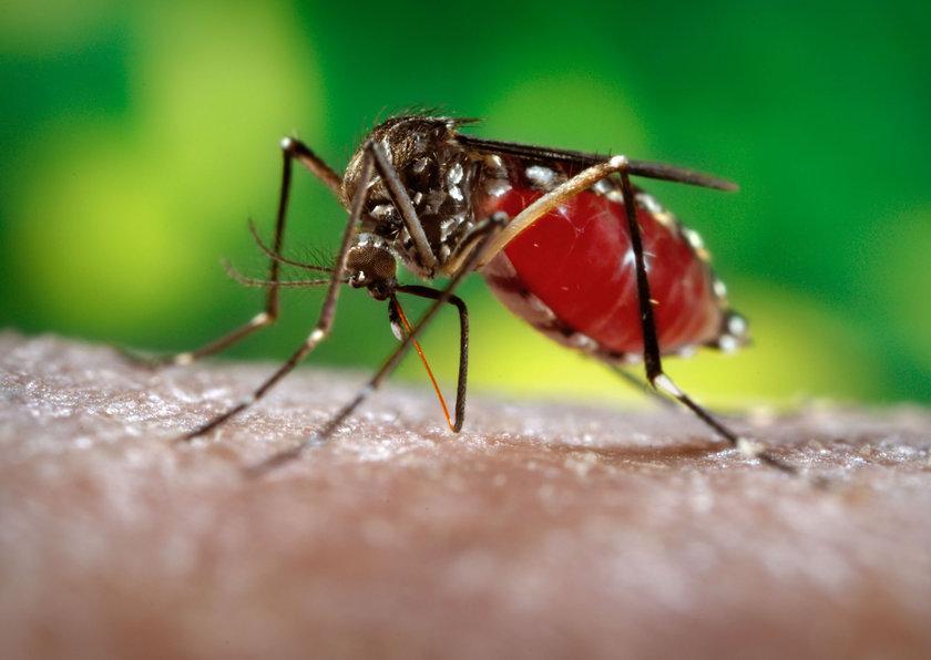 Doğal çözümlerle sivrisineklere cephe alın: Sivrisinek ısırığına maruz kalan kişilerin ısırılan bölgeye buz veya kolonya uygulanarak kaşıntının önüne geçilebileceğini söyleyen Akın, \n