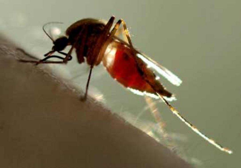 """Bilim adamları, dünya genelindeki insanların yaklaşık yüzde 20'sinin, sivrisinekler için daha """"çekici"""" olduğunu ortaya koydu."""