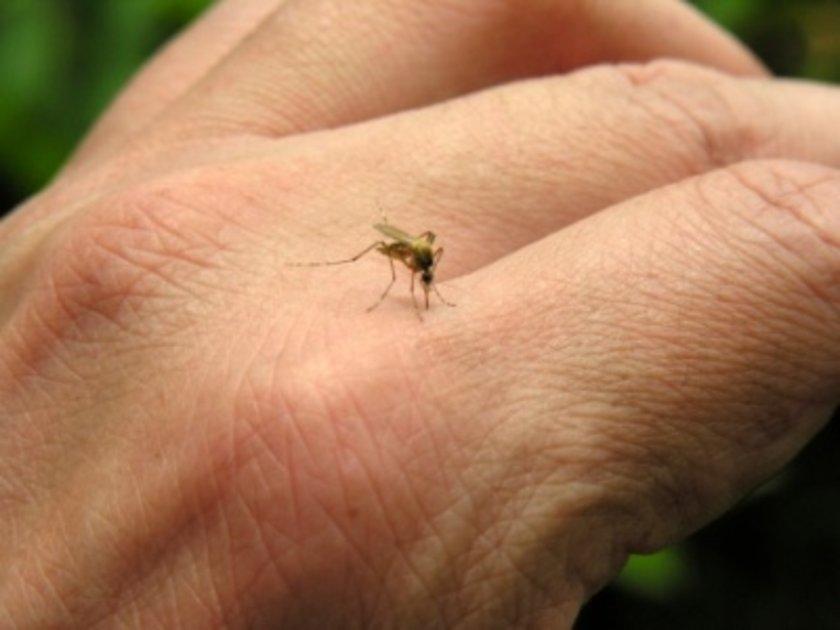 """""""Sivrisineklerden korunmanın en iyi yolu yaz aylarında vücudun açıkta kalan yerlerine kimyasal sivrisinek kovucu spreyler uygulanmasıdır. \n"""