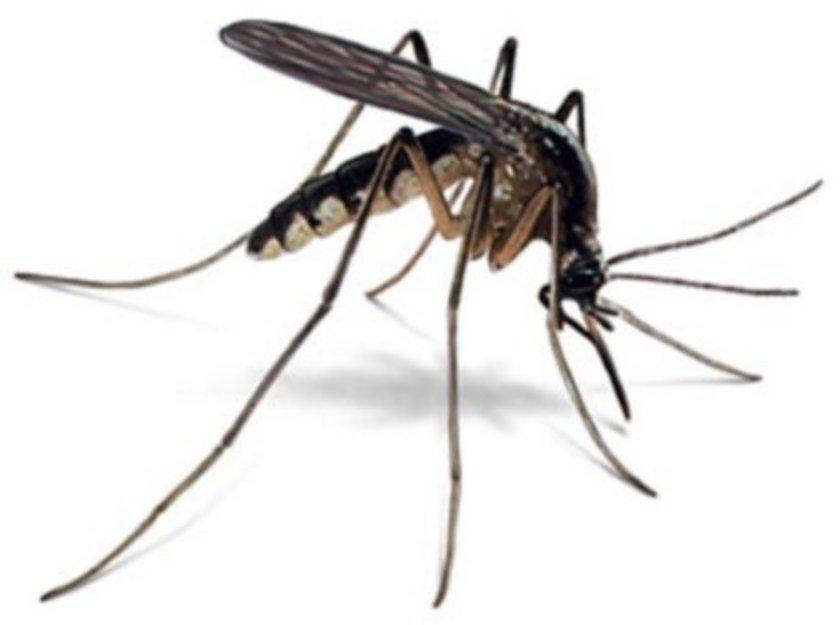Bilim adamı Bart Knols, yaptığı bir araştırmada, sivrisineklerin vücutta en çok ayak kokusuna geldiğini, ayaklar kokulu bir sabunla yıkandığı zaman ise vücudun diğer bölgelerine yöneldiğini keşfetti.