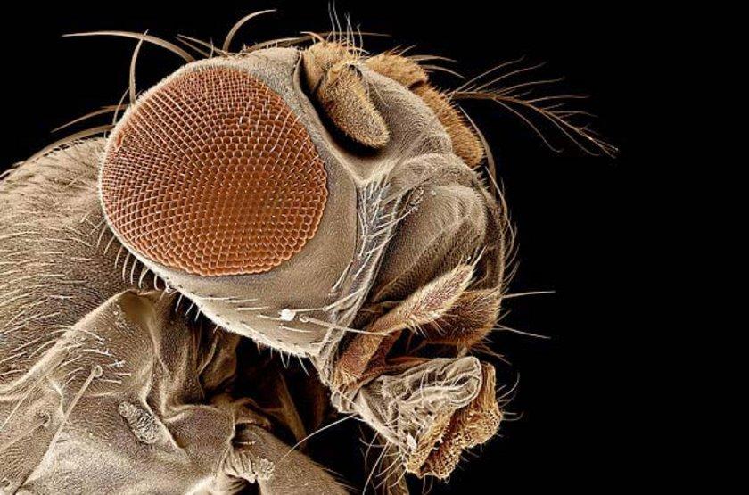 ABD merkezli bir araştırma ise sadece bir şişe dahi olsa, bira içmenin, sivrisinek ısırığına maruz kalma ihtimalini artırdığını ortaya koyuyor.