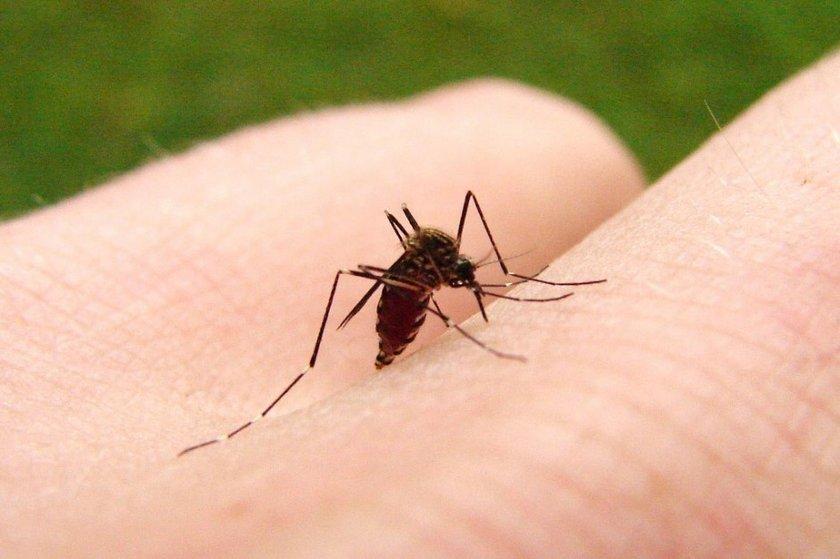 California Teknoloji Enstitüsü'nde araştırmanın yapıldığı rüzgar tünelinde araştırma yapan uzmanlar birkaç farklı nokta belirleyerek aç sivrisineklerin en çok neye yöneldiğini belirlemeye çalıştı. \n