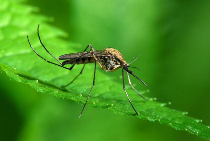"""Akın, """"Özellikle alerjik yapılı kişilerin, hamilelerin, bebeklerin ve bağışıklık sistemi düşük olan kişilerin sivrisineklerden korunması gerekir"""" diyor. \n"""