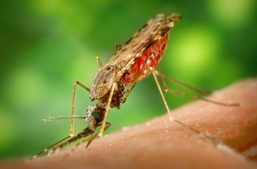 Karanfil, okaliptüs, nane, lavanta, biberiye gibi bitkilerin yağlarını bir bardak suyun içine 1-2 damla koyarak sivrisinekleri kovabilirsiniz.