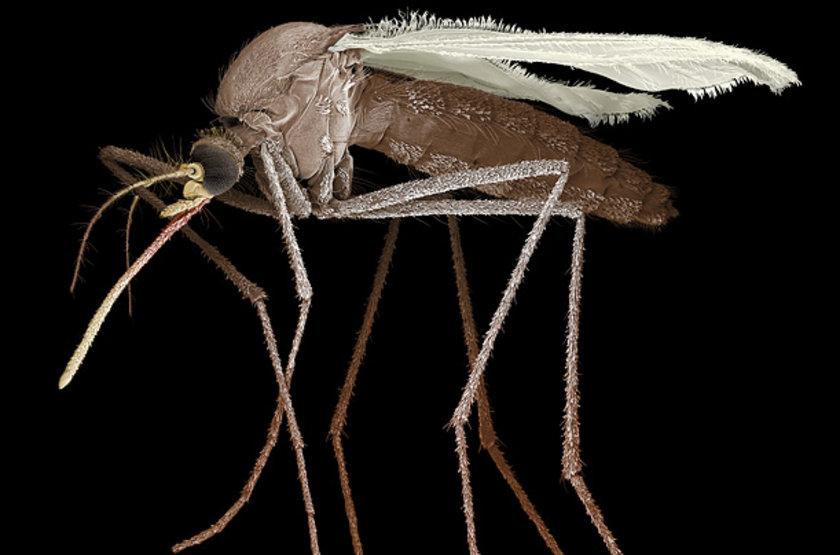 Nefes verirken atılan karbondioksit ve terdeki laktik asit gibi maddeler, sivrisineklerin avını daha kolay bulmasına yardımcı oluyor.