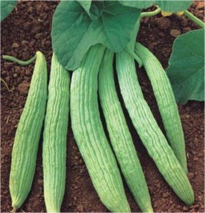 Acur ve salatalık: Kabukları idrar sökücüdür.