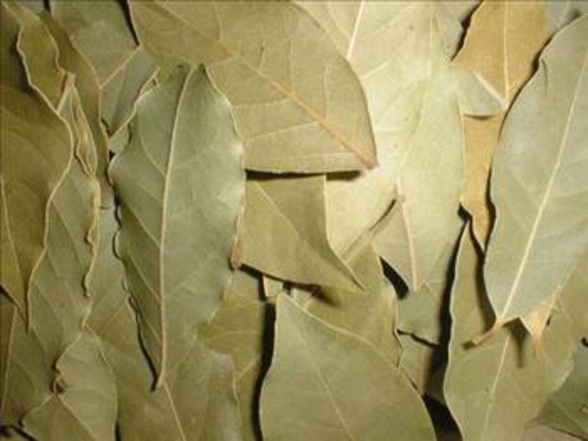 Defne bitkisi nin tıbbi ve kozmetik amaçlı olarak kullanılan bölümü yaprak ve yaprağından elde edilen uçucu esansiyel yağdır. Defne meyvelerinden elde edilen defne yağı antiseptik özelliğe sahiptir.\n