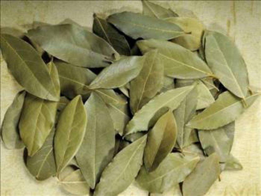 Latince adı Laurus nobilis olan defne ülkemizde Akdeniz Defnesi olarak da bilinmektedir. Defnegiller familyasının Laurus cinsini oluşturan bitki türlerinin ortak adıdır.